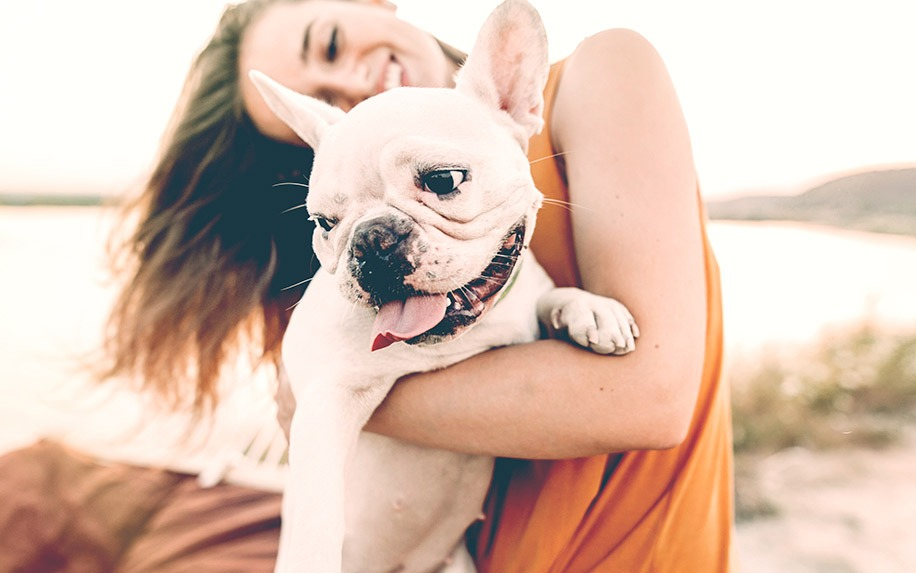 Different types of popular CBD products for dogs