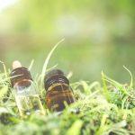 10 different CBD oils reviewed