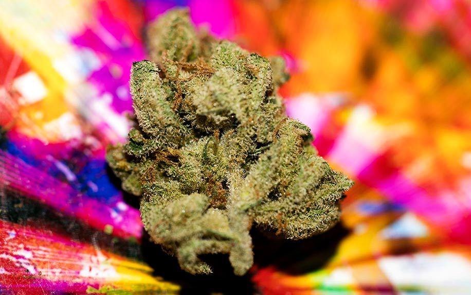 5 of the best strains of weed you can get