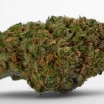 weed/cannabis bud blue dream