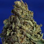weed/cannabis bud acdc