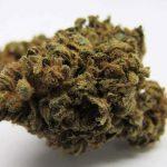 weed/cannabis bud ringos gift