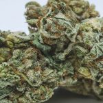weed/cannabis bud stephen hawking kush