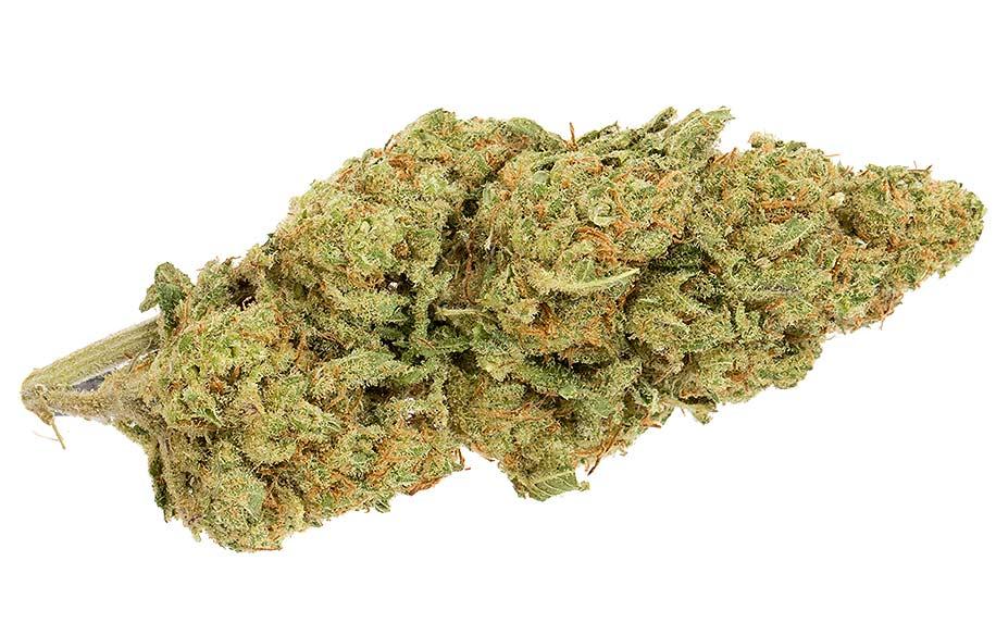 Equal CBD/THC strain pennywise