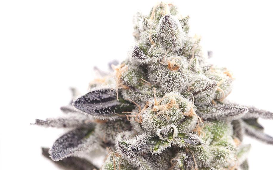 weed/cannabis bud girl scout cookies