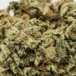 hipster weed strain LA Confidential