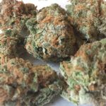 hipster weed strain Sour Urkle
