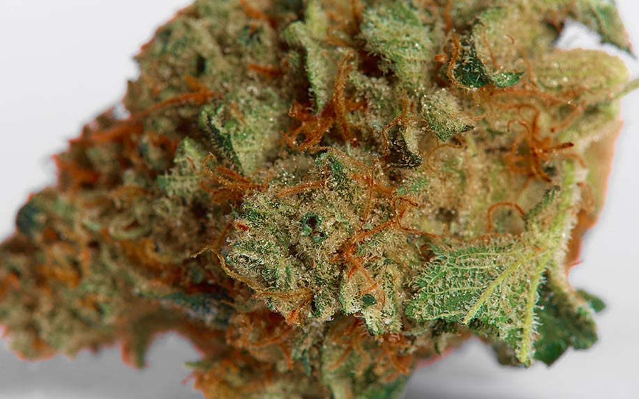 Weed strain strawberry cough