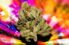 The 5 Best Strains You Can Hit