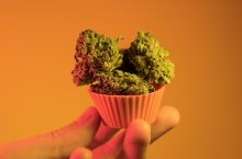 The 5 Best Weed Recipes