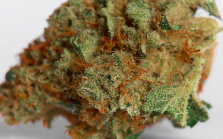 Strawberry Cough